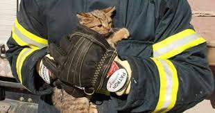 Apartman boşluğuna düşen yavru kedi kurtarıldı