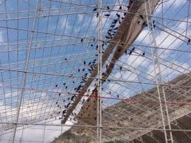 Bereket sembolü kafesteki 278 kelaynak doğaya salındı
